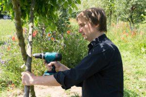Prof. Ferdinand Ludwig baut mit lebenden Pflanzen. Auf dem Versuchsfeld in Weihenstephan verschraubt er zwei Bäume miteinander. Foto: Uli Benz / TUM