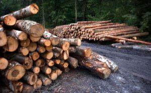 In deutschen Wäldern stapelt sich das Kalamitätsholz. Foto: Jerzy Górecki/Pixabay