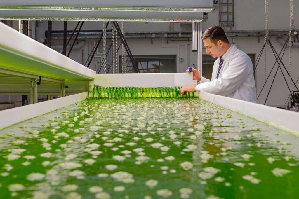 Thomas Brück im Algentechnikum der TU München. LEDs simulieren verschiedenste Lichtsituationen, damit die Algen wachsen können. Aus ihnen lassen sich Carbonfasern gewinnen, die Stahlarmierungen ersetzen können. (Bild: Andreas Heddergott / TUM)